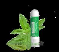 PURESSENTIEL RESPIRATOIRE Inhalation nasal 19 huiles essentielles à QUINCAMPOIX
